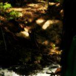 bosque fueguino - saltoexplorers