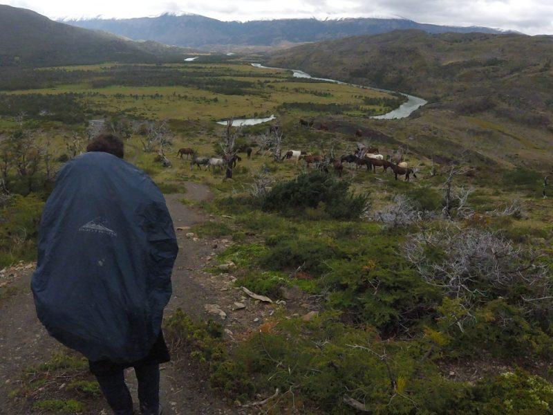 Lu encontró caballos en el circuito O de Torres del Paine